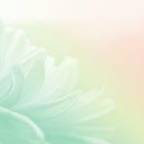 Flores e foco macio Fotografia de Stock Royalty Free