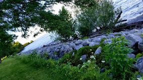 Flores e Foilage Imagem de Stock