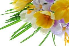 Flores e folha Fotografia de Stock