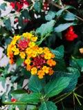 Flores e folha do outono Foto de Stock Royalty Free