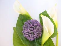 Flores e folhas Foto de Stock