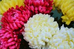 Flores e folhas coloridas, fundo natural fotos de stock