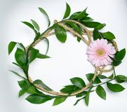 Flores e folhas cor-de-rosa do verde Foto de Stock