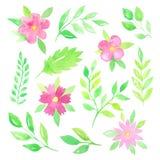Flores e folhas da aquarela Fotos de Stock Royalty Free