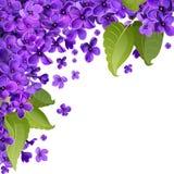 Flores e folhas do lilás Fundo abstrato para o Ca de cumprimento Fotos de Stock Royalty Free