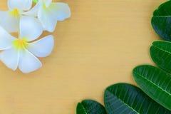 Flores e folhas do Plumeria Fotografia de Stock Royalty Free