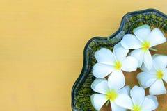 Flores e folhas do Plumeria Imagens de Stock