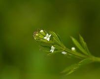 Flores e folhas dos talhadores Imagem de Stock Royalty Free