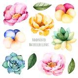 Flores e folhas Handpainted da aquarela ilustração stock