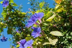 Flores e folhas pequenas de plantas selvagens do campo em Uruguai imagens de stock royalty free
