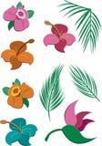 Flores e folhas tropicais Fotografia de Stock Royalty Free