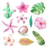 Flores e folhas tropicais do verão da aquarela ilustração stock