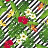 Flores e folhas tropicais no fundo diagonal ilustração royalty free
