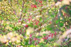 Flores e folhas vermelhas do verde foto de stock