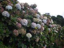 Flores e fundo brancos da cor imagem de stock