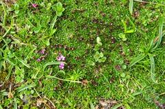 Flores e fundo da grama verde Foto de Stock