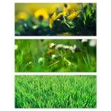 Flores e grama da mola Fotos de Stock Royalty Free