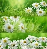 Flores e grama da mola Imagem de Stock