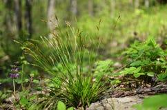Flores e grama na floresta Imagem de Stock