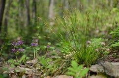 Flores e grama na floresta Fotografia de Stock Royalty Free