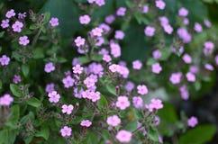 Flores e grama na floresta Imagem de Stock Royalty Free