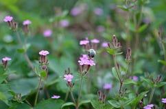 Flores e grama na floresta Fotos de Stock