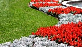 Flores e grama vermelhas de Snapdragon Foto de Stock Royalty Free