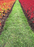 Flores e gramas ajardinando, coloridas Fotos de Stock Royalty Free