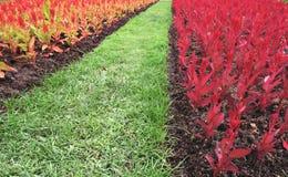 Flores e gramas ajardinando, coloridas Imagens de Stock