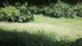Flores e gramas em um campo que move-se no vento em um dia de verão ensolarado vídeos de arquivo