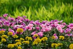 Flores e hierba Foto de archivo libre de regalías