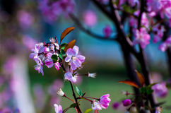 Flores e hierba en un jardín Fotografía de archivo libre de regalías