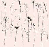 Flores e hierba secadas