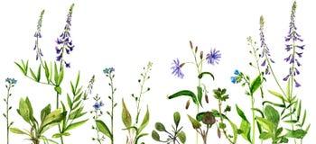 Flores e hierbas del dibujo de la acuarela ilustración del vector