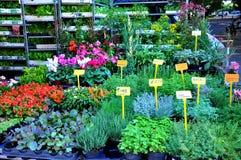 Flores e hierbas en venta Fotos de archivo libres de regalías