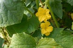 Flores e hortaliças Imagem de Stock