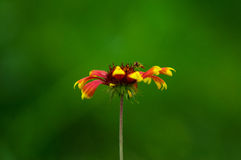 Flores e hortaliças Foto de Stock Royalty Free