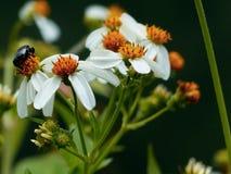 flores e insecto imagen de archivo libre de regalías