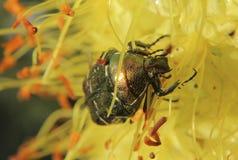 Flores e insectos Imágenes de archivo libres de regalías