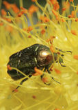 Flores e insectos Imagen de archivo