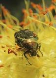 Flores e insectos Fotos de archivo