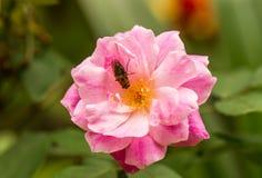 Flores e insectos Imagen de archivo libre de regalías