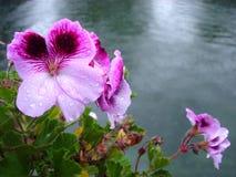 Flores e lago Foto de Stock Royalty Free