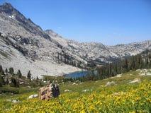 Flores e lago da montanha Foto de Stock Royalty Free