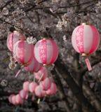 Flores e lanternas de cereja Fotografia de Stock Royalty Free