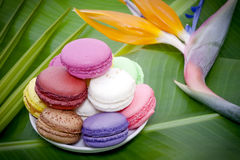 Flores e Macaroons franceses Fotografia de Stock Royalty Free
