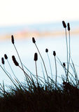 Flores e mar imagens de stock royalty free
