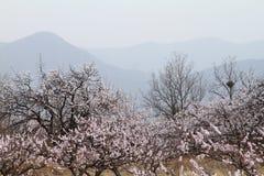 Flores e montanhas Fotos de Stock Royalty Free