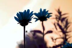 Flores e mudado a cor imagens de stock