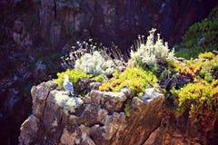 Flores e pássaro nos penhascos do perto do oceano Imagem de Stock Royalty Free